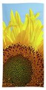 Sunflower Sunlit Sun Flowers Giclee Art Prints Baslee Troutman Beach Towel