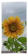 Sunflowers 2018-1 Beach Towel
