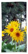 Sunflowers And Pine Cones Beach Towel by Will Borden