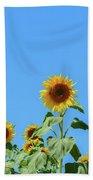 Sunflowers On Blue Beach Towel