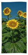 Sunflowers Weldon Spring Mo Ver1_dsc9821_16 Beach Towel