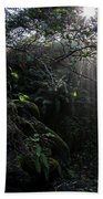 Sunlight Falling Into Glen With Bright Leaves, Vertical Beach Towel