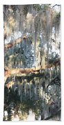 Sunlight On Mossy Tree Beach Towel