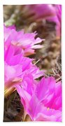 Sunlight On Pink Cactus Blooms Beach Towel