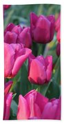 Sunlight On Pink Tulips Beach Towel