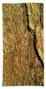 Sunlit Tree Bark Beach Towel