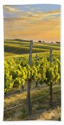 Sunlit Vineyard Beach Towel