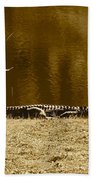 Sunning Gator Beach Towel