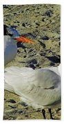 Sunning Terns Beach Towel