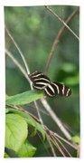 Sunning Zebra Longwing Butterfly Beach Towel