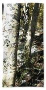 Sunny Aspen Shadows Beach Towel