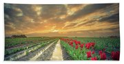Sunrise At Tulip Filed After A Storm Beach Towel