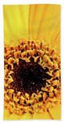 Sunrise Gerbera Beach Towel