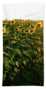 Sunset And Rows Of Sunflowers Beach Towel