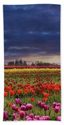 Sunset At Colorful Tulip Field Beach Sheet