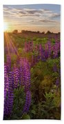 Sunset Over Meadow Of Lupine Beach Towel