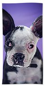 Super Pets Series 1 - Bugsy Close Up Beach Towel