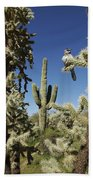 Surrounded Saguaro Cactus Wren Beach Towel