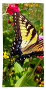 Swallow Tail Butterfly Enjoying The Sunshine Beach Towel