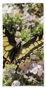 Swallowtail At Sand Wash Beach Towel