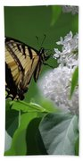 Swallowtail Beauty Beach Towel