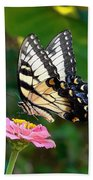 Swallowtail Butterfly 3 Beach Towel