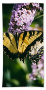 Swallowtail Butterfly At The Maryland Zoo Beach Towel