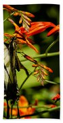 Swallowtail Hanging On The Crocosmia Beach Towel