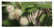 Swallowtail With Flowers Beach Towel