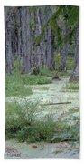 Swamp Garden At Magnolia Plantation And Gardens Beach Towel