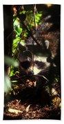 Swamp Raccoon Beach Towel
