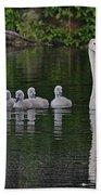 Swan Family Portrait Beach Towel