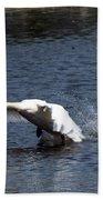 Swan Landing 3 Beach Towel