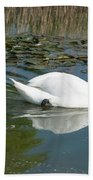 Swan Scenic Beach Towel