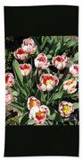 Swanhurst Tulips Beach Towel