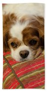 Sweet Dog Face Beach Towel