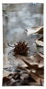 Sweet Gum Seed Pod In Mississippi Winter Beach Towel