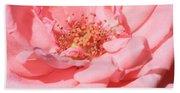 Sweet Pink Rose  Beach Towel