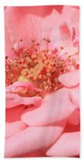 Sweet Pink Rose  Beach Towel