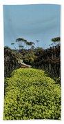 Sweet Vines Beach Towel by Douglas Barnard