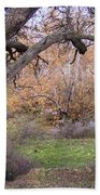Sycamore Grove Fall Beach Towel