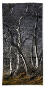 Sycamore Grove Beach Towel