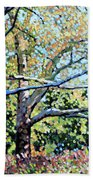Sycamore Trees At The Zoo Beach Towel