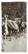 Syria: Caravan, C1900 Beach Towel