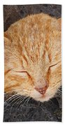 Tabby Beach Towel