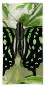 Tailed Jay Butterfly #2 Beach Towel