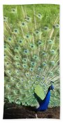 Tailfeathers Beach Towel