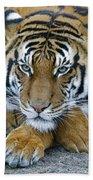 Takin A Break Tiger Beach Towel