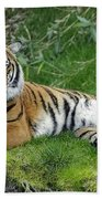 Takin It Easy Tiger Beach Towel