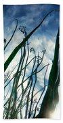 Talking Reeds Beach Towel